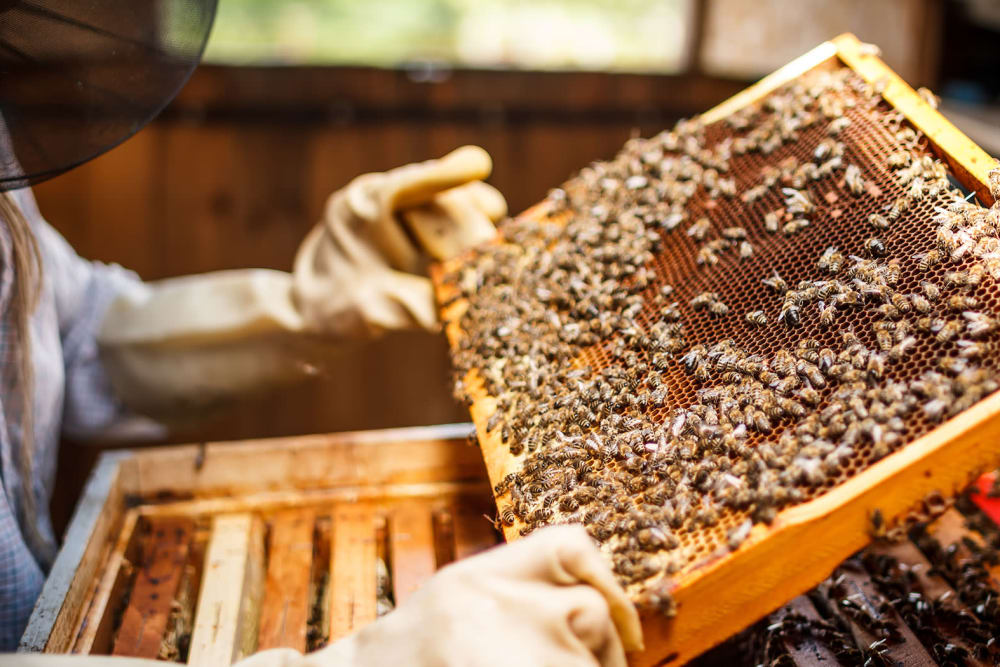 Bee keeping at Silver Companies
