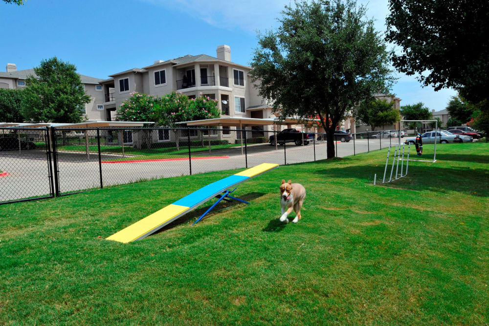 Unique dog park at apartments at Ballantyne Apartments in Lewisville, Texas
