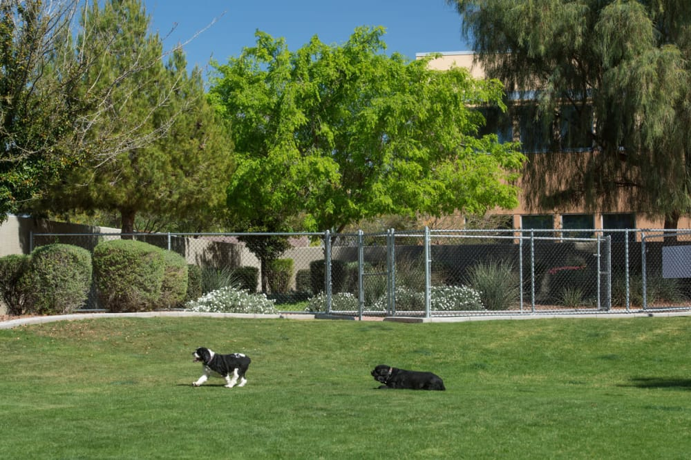 Villas on Hampton Avenue offers a unique dog park in Mesa, Arizona