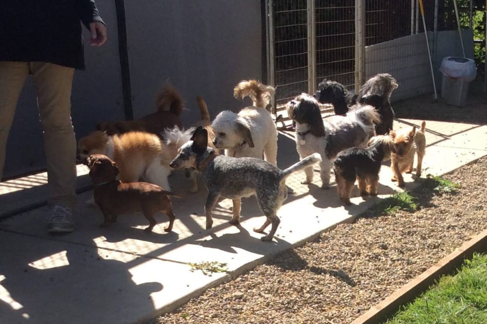 Dogs having a good time at University Pet Resort in Merced, California