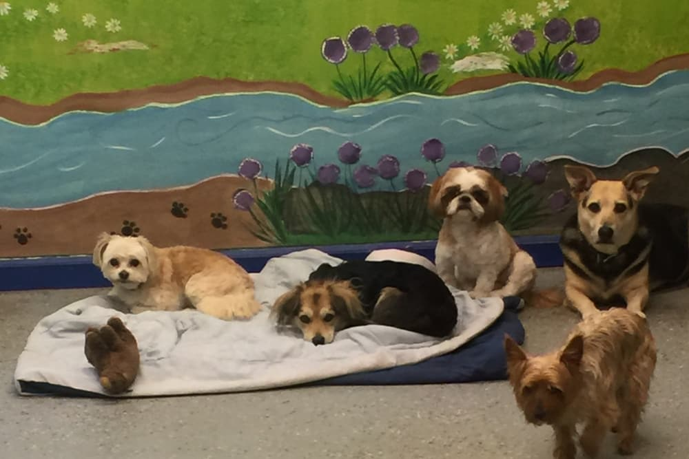 Dogs hanging out inside at University Pet Resort in Merced, California