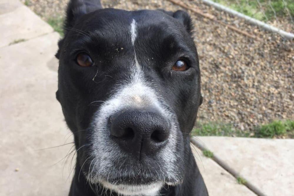 Serious dog at University Pet Resort in Merced, California