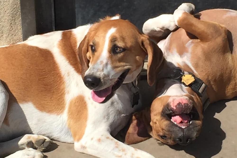 Cute dogs relaxing in the sunlight at University Pet Resort in Merced, California