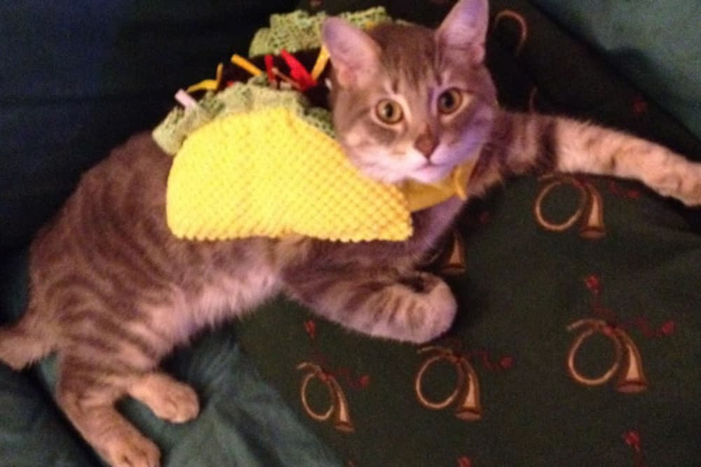 Cat taco at Saint Paul animal hospital