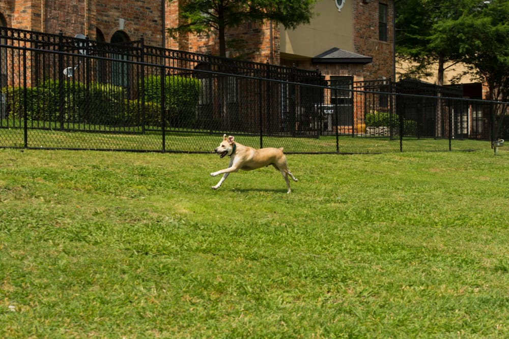 A dog is running on the grass at Villas at Parkside in Farmers Branch, Texas