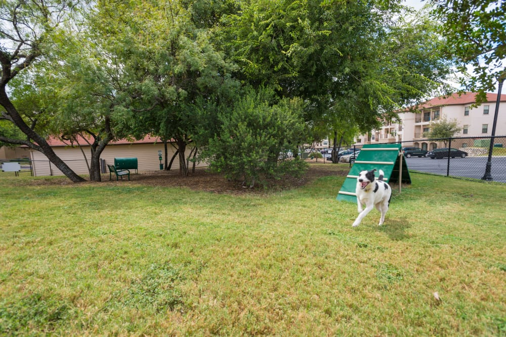 Dog park at Villas at Medical Center in San Antonio, Texas