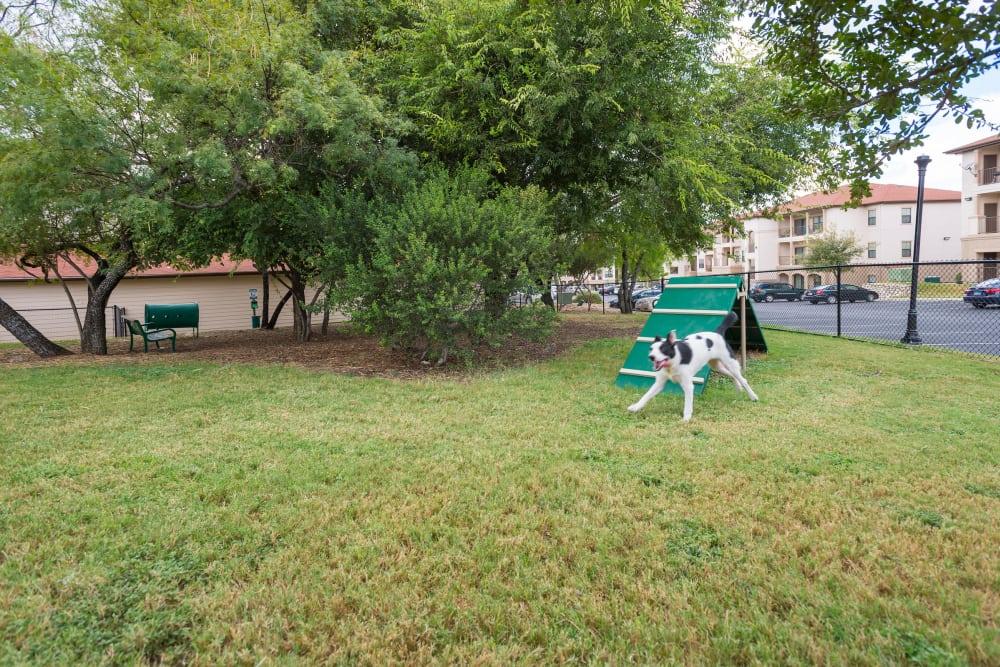 Dog park at Villas at Medical Center in San Antonio, Texas