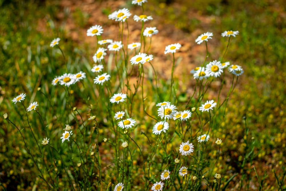Flowers at Haddon Place in McDonough, Georgia