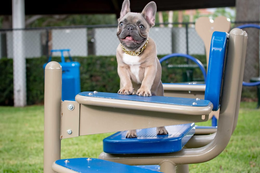 Pet Friendly Bark Park at The Sophia at Abacoa in Jupiter, Florida