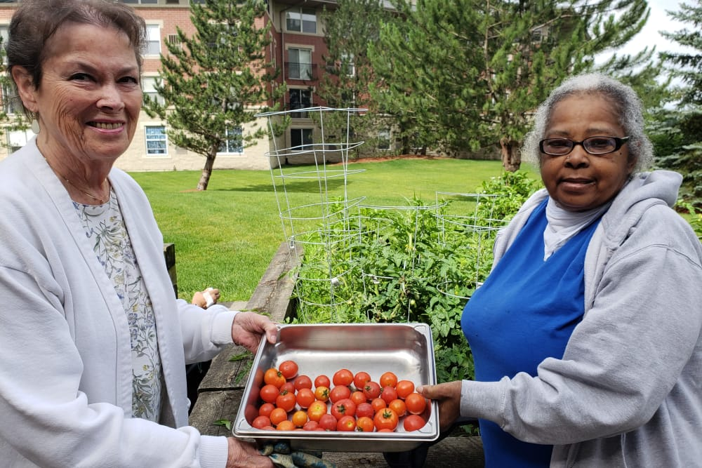 two residents holding tomatoes in a pan