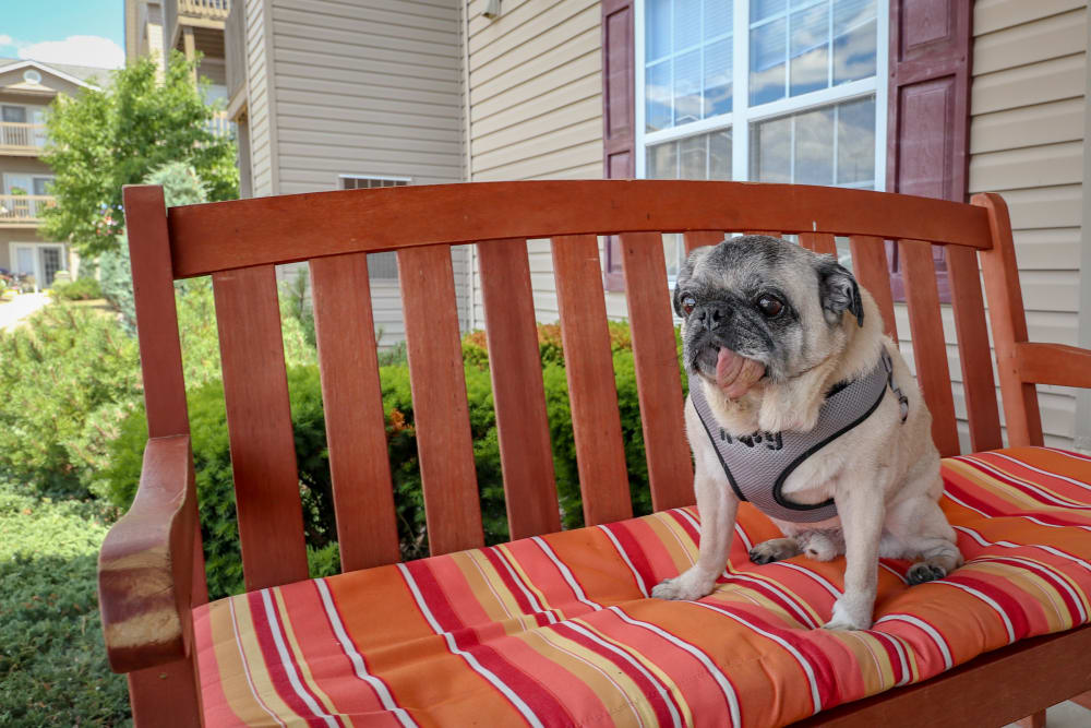 Dog resting on a bench at Turtle Creek Apartments in Getzville, New York