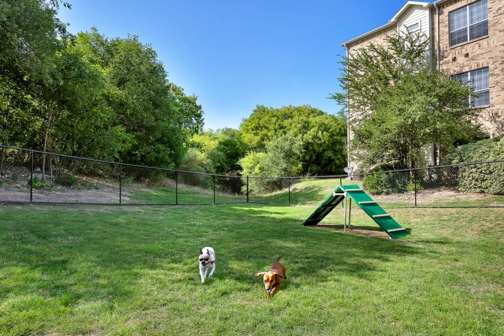 Dog park at Stoneybrook Apartments & Townhomes in San Antonio, Texas