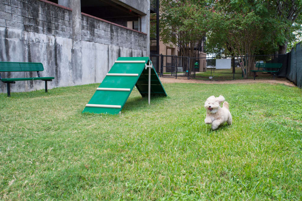 Dog park at The Vintage in San Antonio, Texas