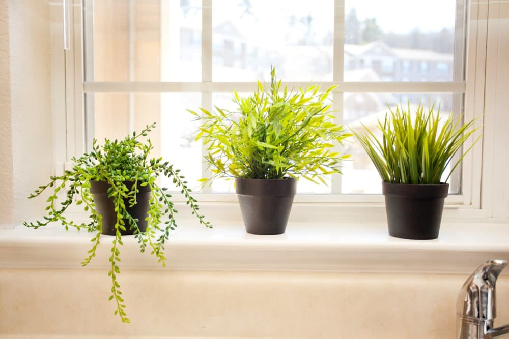 Plants in the window at The Village of Meadowview in Boone, North Carolina