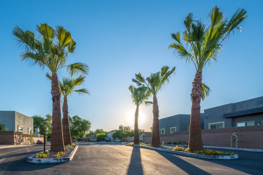 Apartments and sunset view at Avilla Grace in Chandler, Arizona