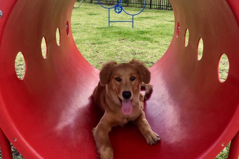Dog Friendly at Springs at Eagle Bend