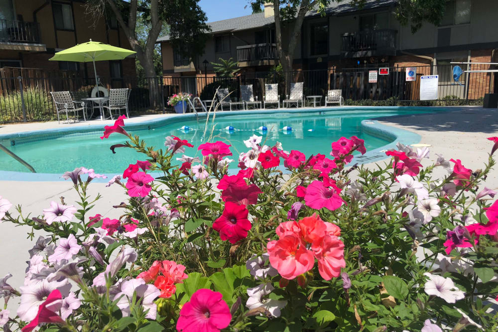 Sparkling swimming pool on a beautiful day at Forest Cove Apartments in Denver, Colorado