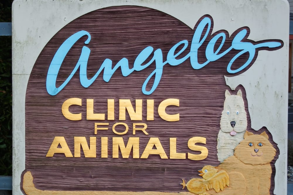 Welcome to Angeles Clinic For Animals in Port Angeles, Washington
