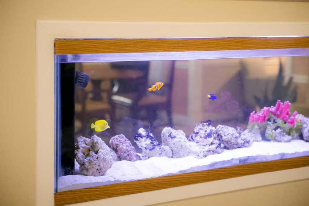 Fish tank at Grace Manor Assisted Living in Nashville, Tennessee