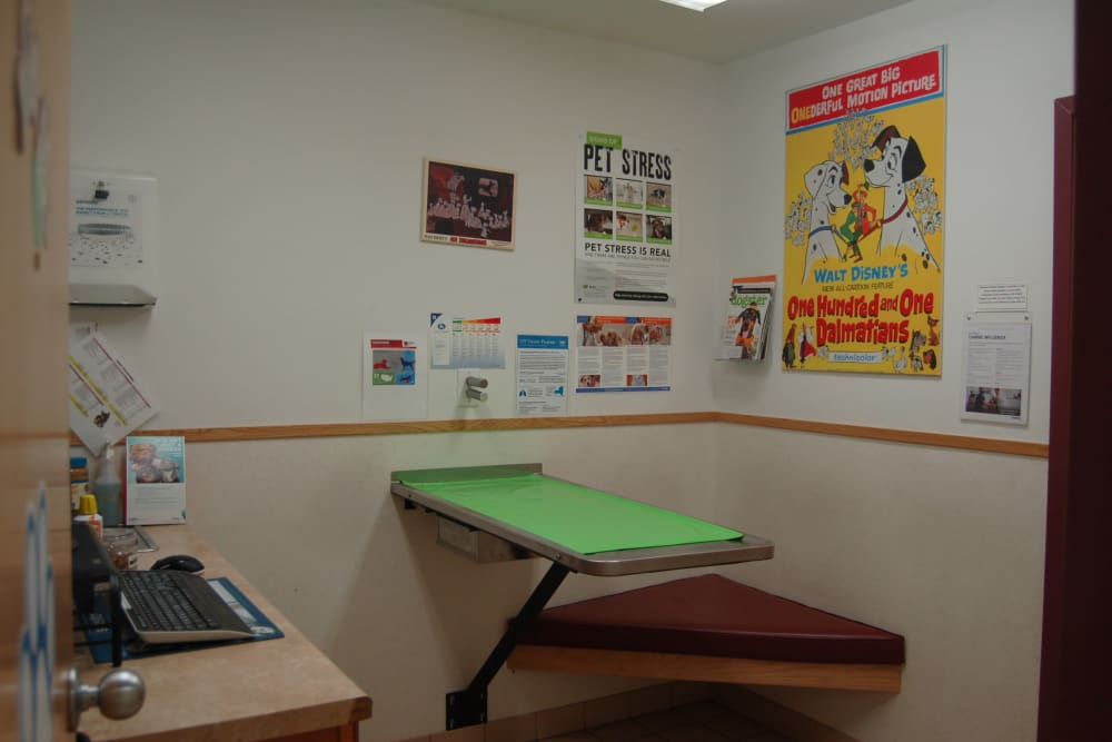 Exam room for pets at Kenmore Animal Hospital in Kenmore, New York