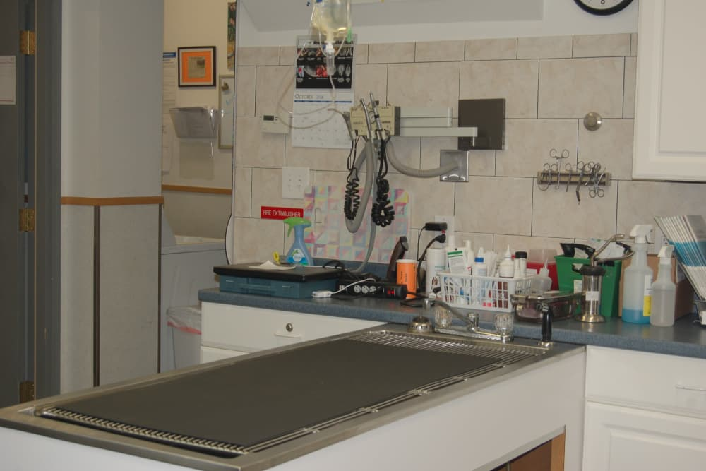 Surgery area at Kenmore Animal Hospital in Kenmore, New York