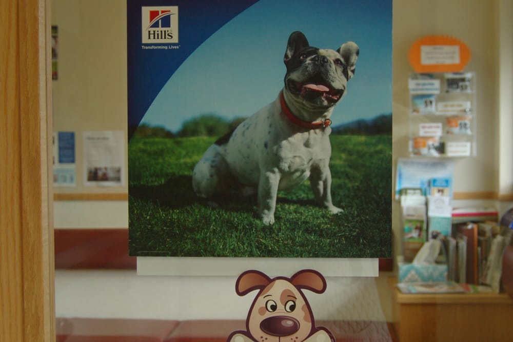 Paw plans poster at Kenmore Animal Hospital in Kenmore, New York