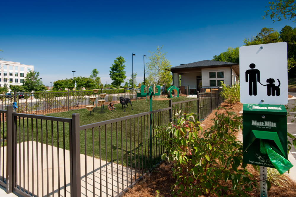Dog park at Perimeter Lofts in Charlotte, North Carolina