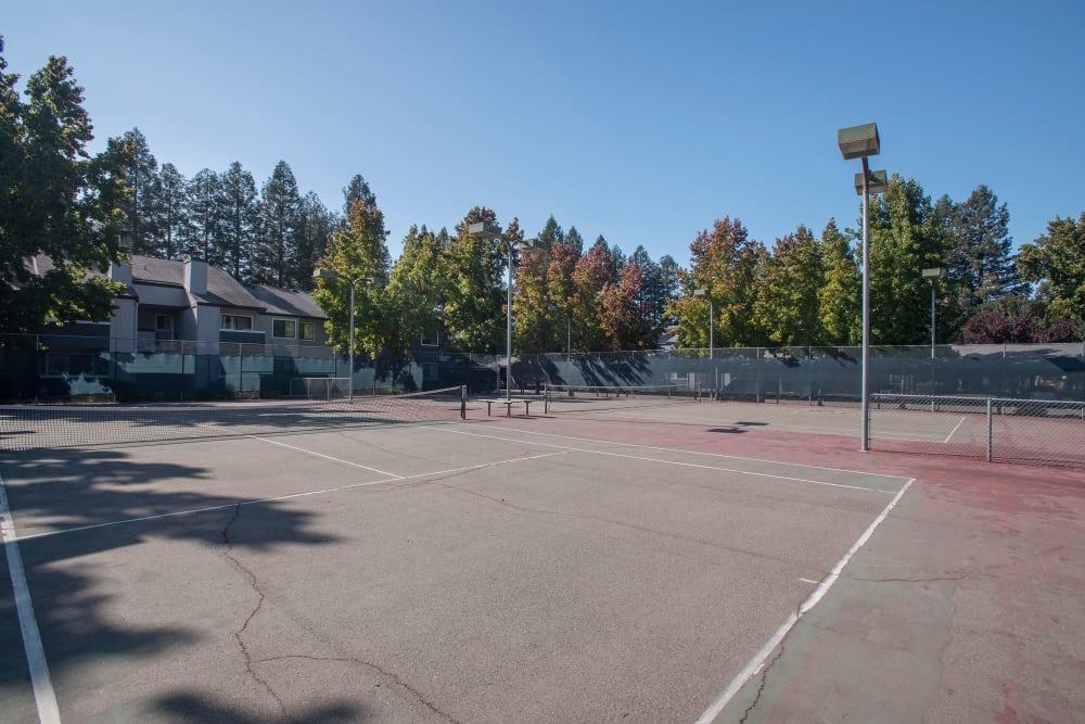 Outdoor recreation area at Park Ridge Apartment Homes in Rohnert Park, California