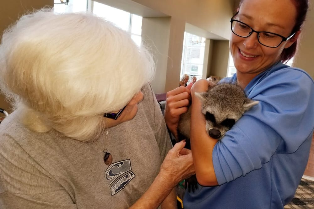 A resident petting a young raccoon at Clearvista Lake Health Campus in Indianapolis, Indiana