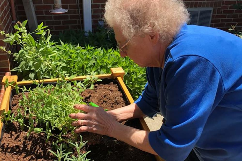 Lady gardening on a sunny day at Hampton Oaks Health Campus in Scottsburg, Indiana