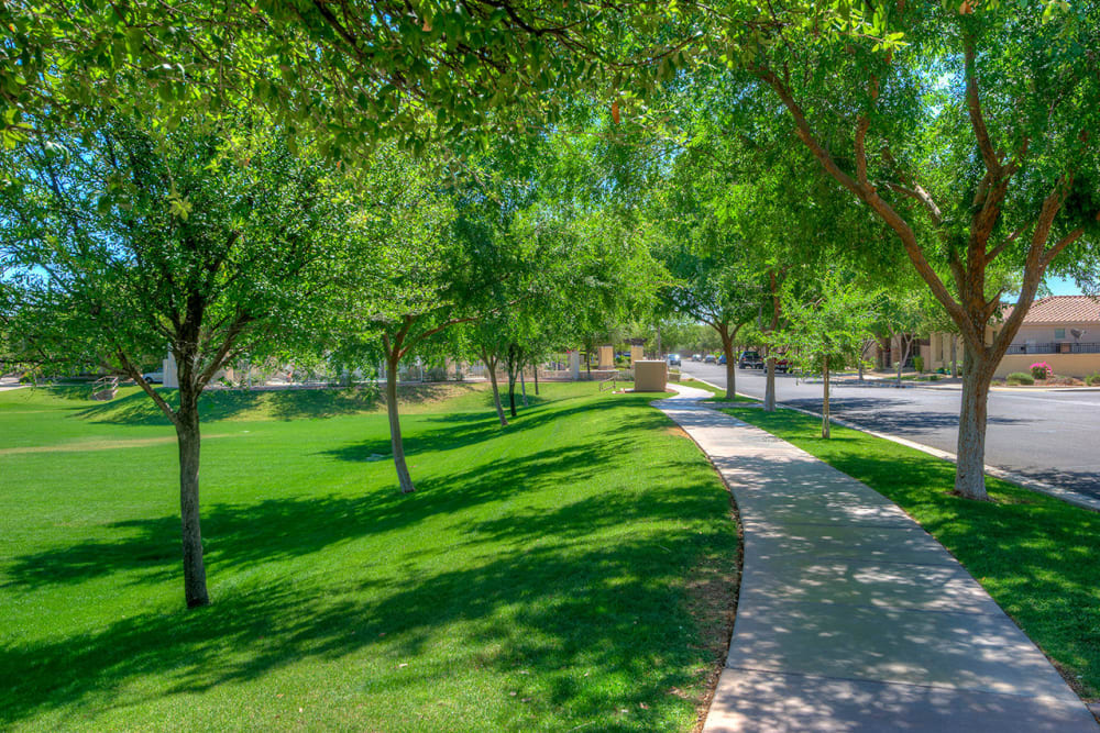 Tree-lined walkway around the community at BB Living at Higley Park in Gilbert, Arizona