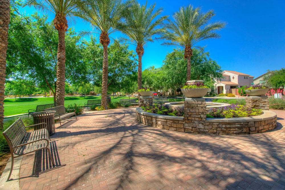 Onsite park with large palm trees at BB Living at Higley Park in Gilbert, Arizona