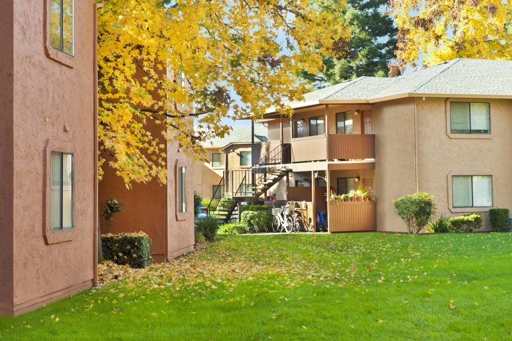 Large grassy yard at Pine Tree Apartments in Chico, California