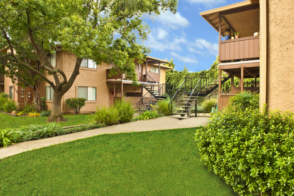 Beautiful walking path on a sunny day with blue skies at Pine Tree Apartments in Chico, California