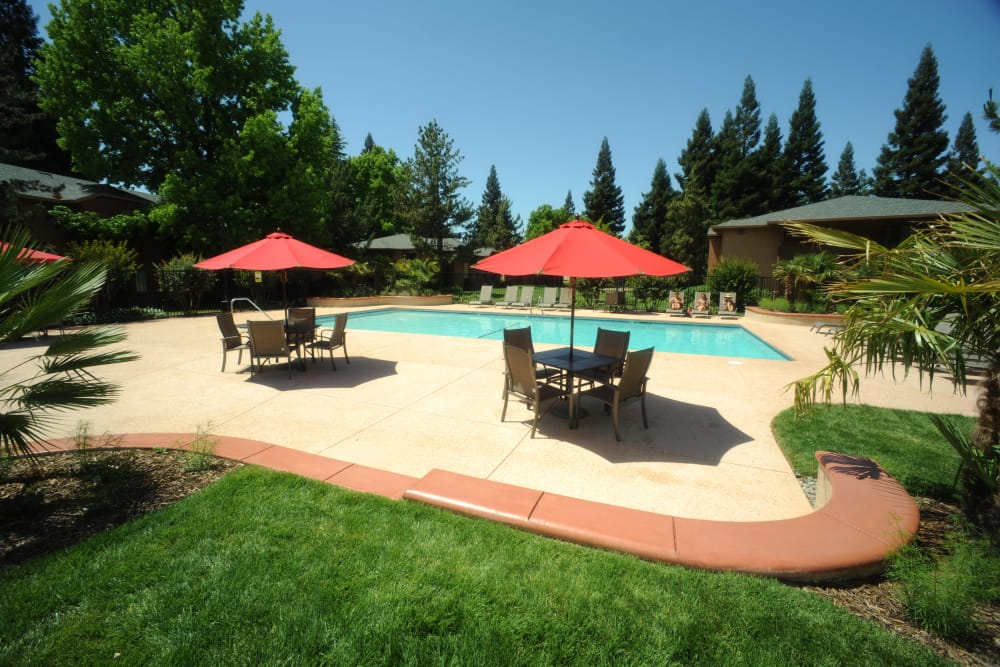 Large outdoor in-ground swimming pool with covered seating at Pine Tree Apartments in Chico, California