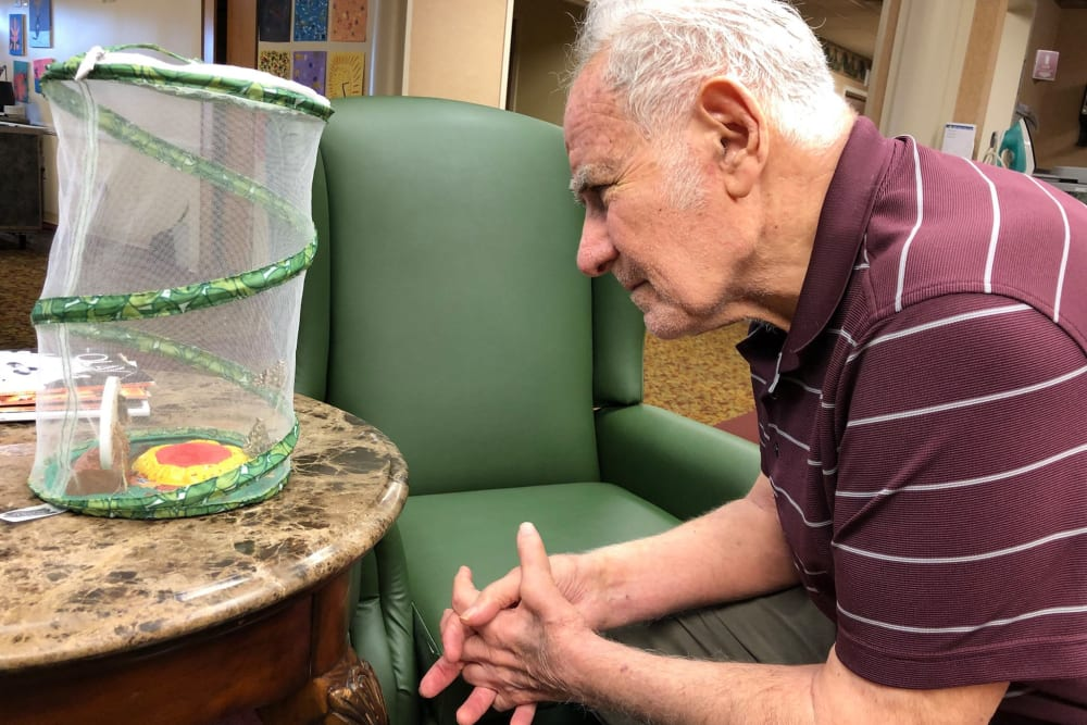 A resident admiring butterflies in a mesh enclosure at Park Terrace Health Campus in Louisville, Kentucky