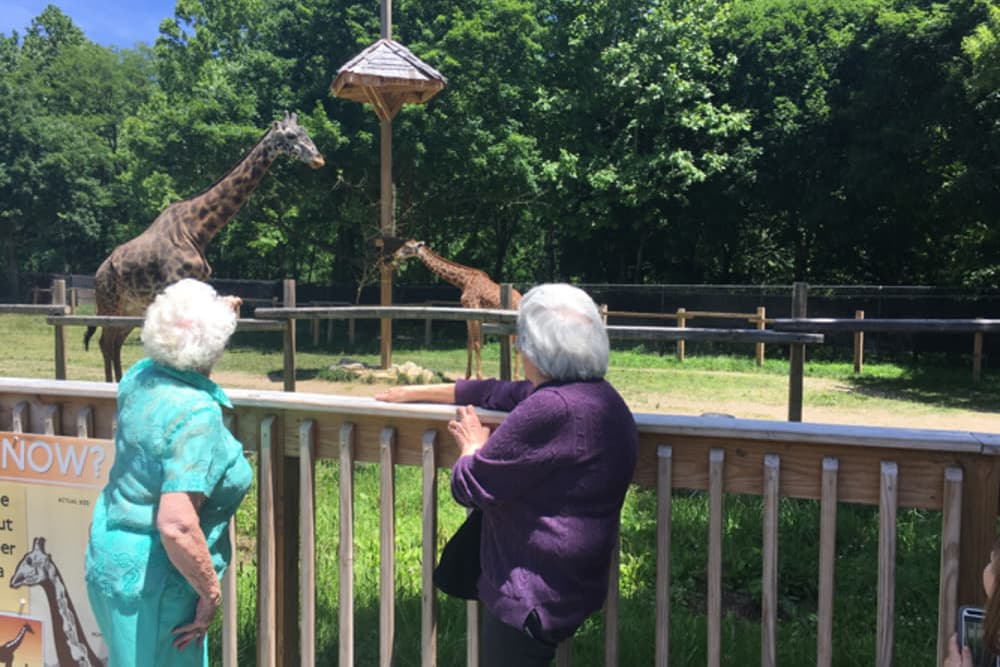 two residents from Heritage Hill Senior Community at the zoo looking at a giraffe in Weatherly, Pennsylvania