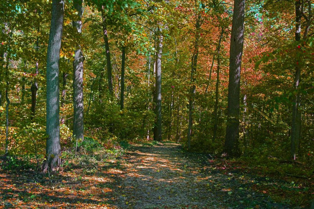 Walking trail around Muirwood in Farmington Hills, Michigan