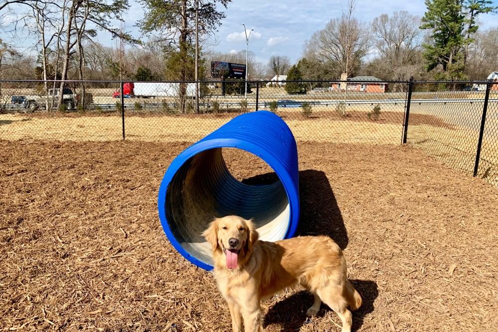 Dog park at apartments in Graham, North Carolina