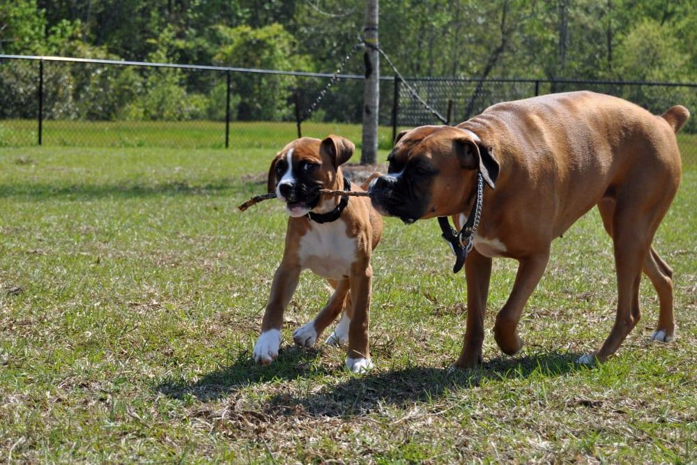 Leash Free Dog Park