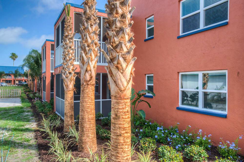 Trees lining the perimeter of El Mar in North Redington Beach, Florida