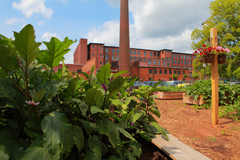 Beautiful community garden view at The Lofts Of Greenville in Greenville, South Carolina