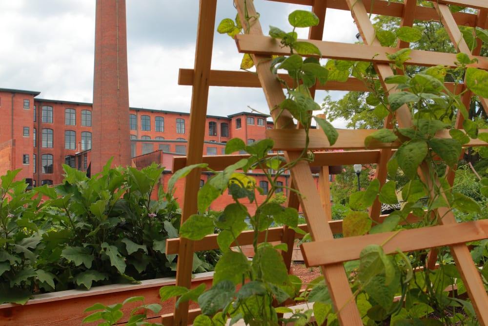 Community garden photo of The Lofts Of Greenville in Greenville, South Carolina