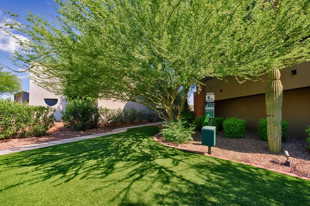 Green tree at Ten Wine Lofts in Scottsdale, Arizona