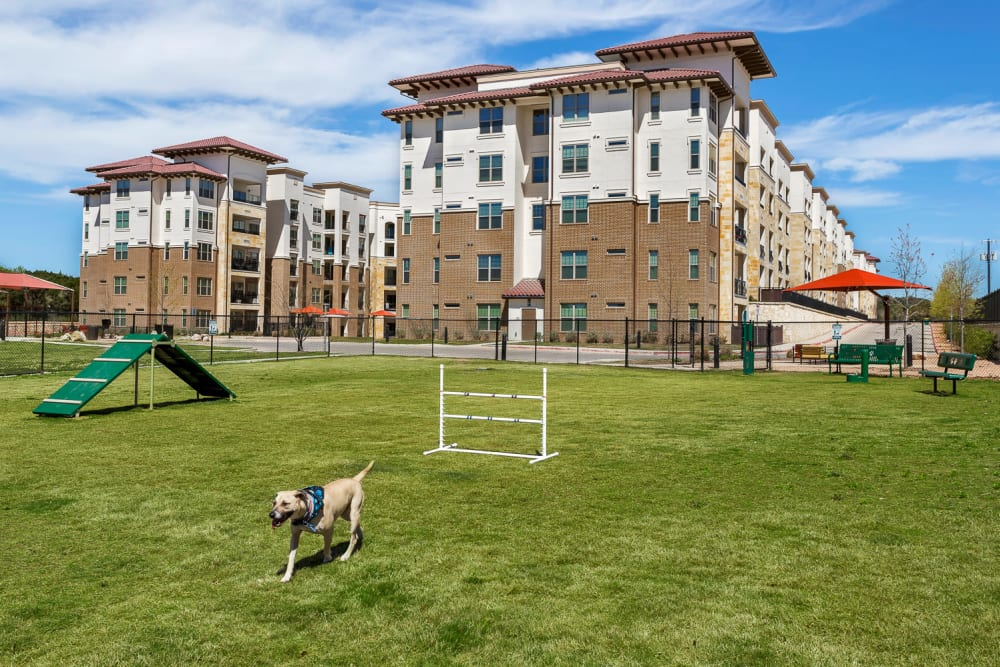 Our Apartments in San Antonio, Texas offer a Dog Park