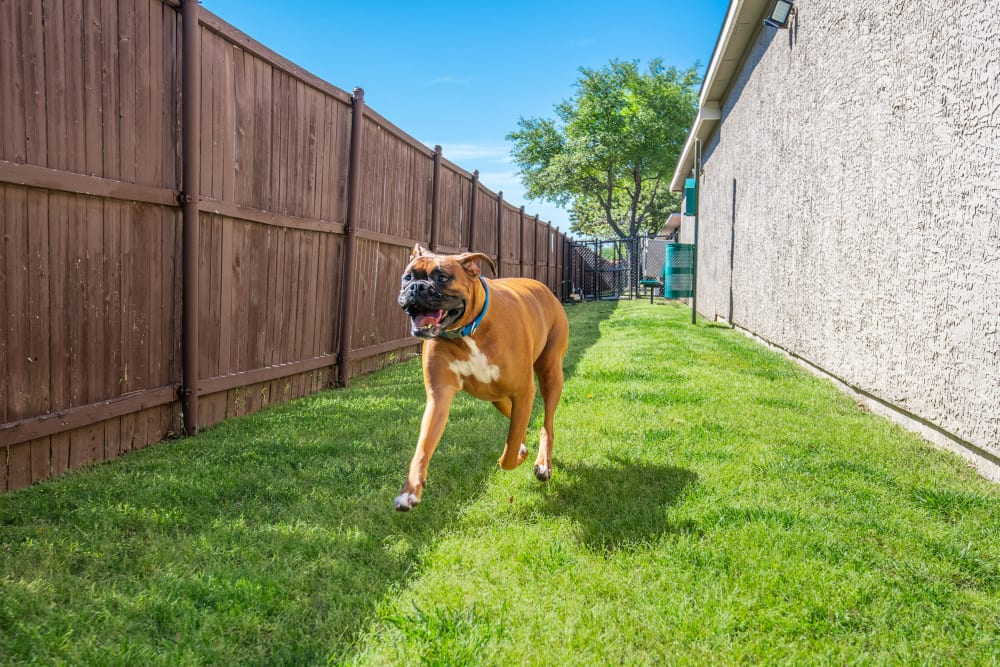 Briargrove at Vail offers a Pet Friendly Apartments in Dallas, Texas