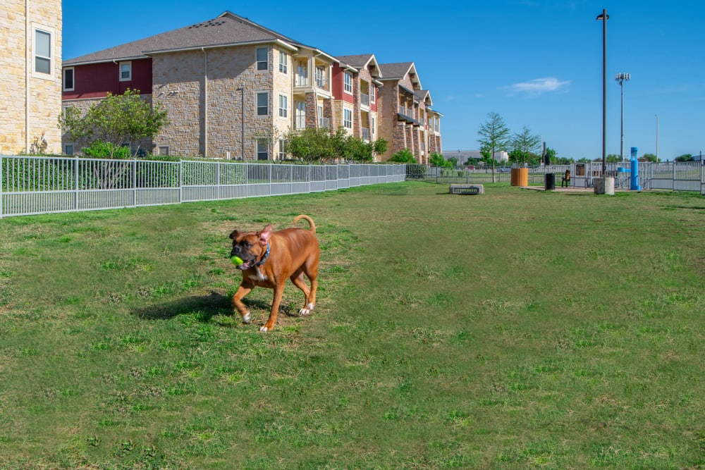 Enjoy Apartments with a Dog Park at Estates of Richardson in Richardson, Texas