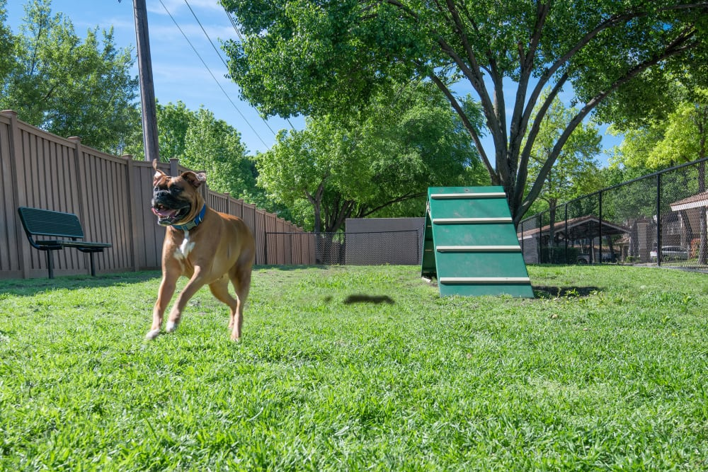 Our Apartments in Dallas, Texas offer a Dog Park