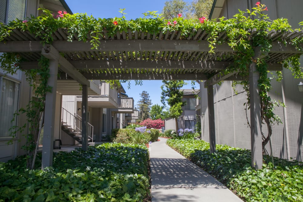 Gorgeous foliage at Appletree Apartments in Campbell, California