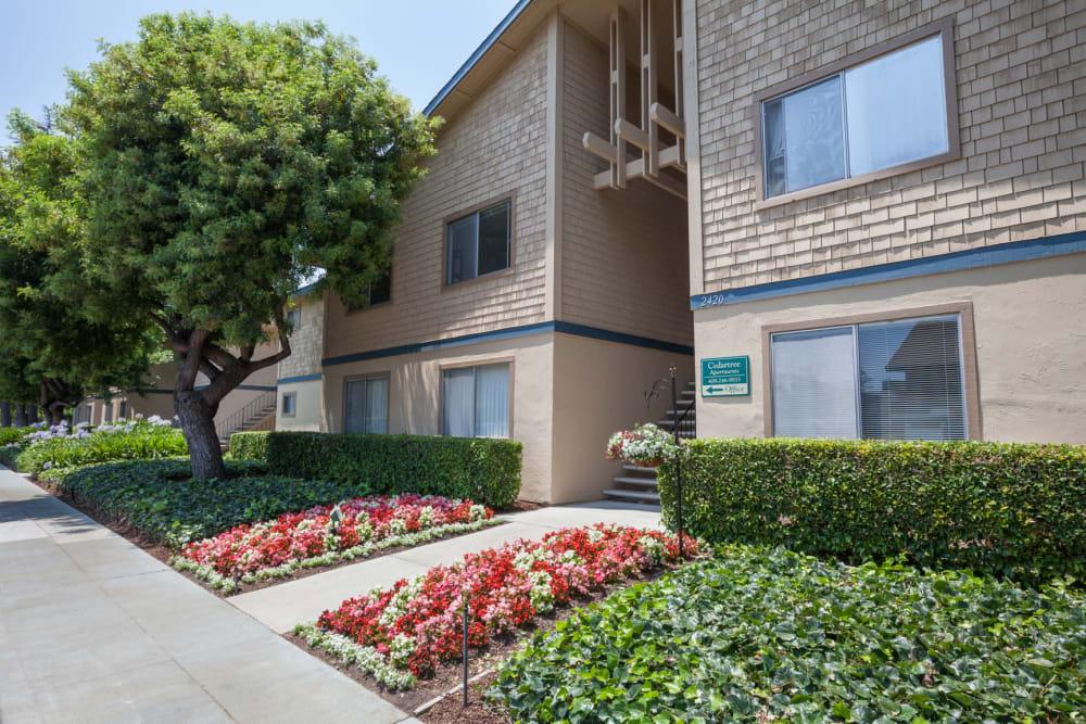 Beautiful landscaping at Cedartree Apartments in Santa Clara, California
